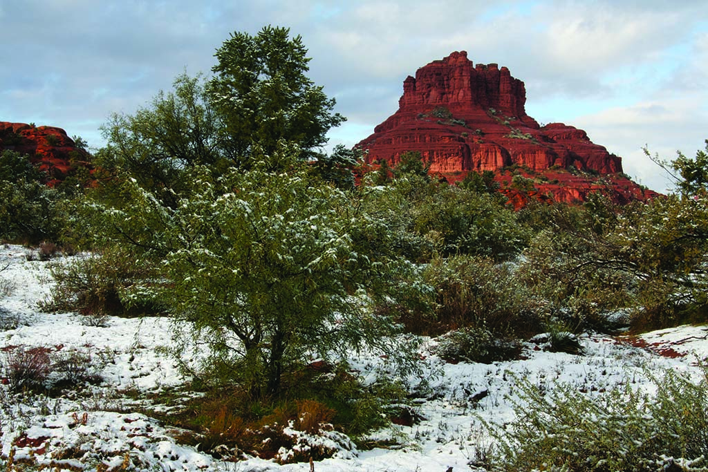 The monolithic Bell Rock formation rises above snow-dusted ponderosa pines and twisted cottonwoods.