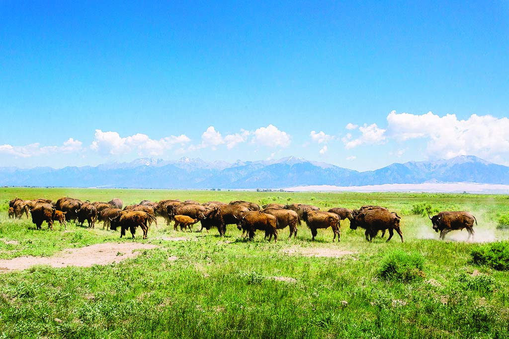 Zapata's ecologically minded preservation of its pastures and grazing lands distinguishes it from other ranches in southern Colorado.