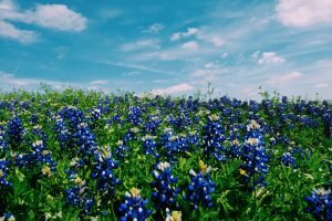 small-Texas-Hill-Country