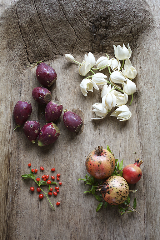 Freshly picked prickly pear cactus fruit, wild mint, yucca blossoms, pomegranates and fiery chile pequin. Photo by Jody Horton.