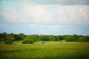 Deep in the grasslands of south Texas, an unforgiving  landscape provides a home for the exotic nilgai antelope.