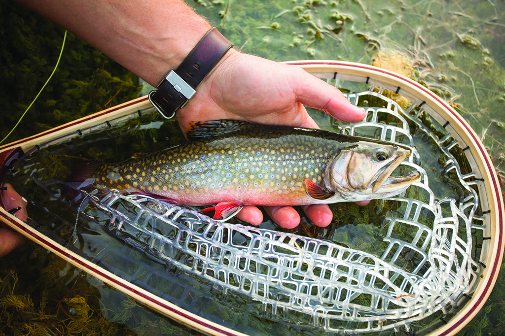 Rainbow trout abound in the ranch's nearby creek. Photo by Patrick Brooks Brandenburg.
